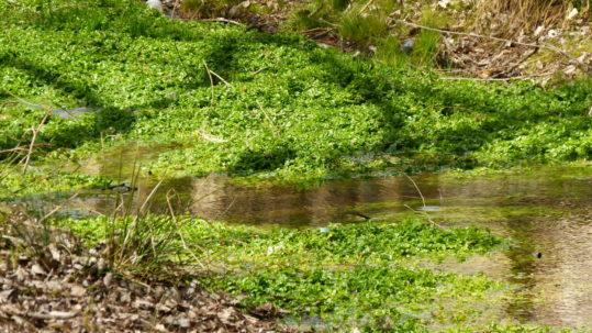 Manantial de captación de agua de CALterras