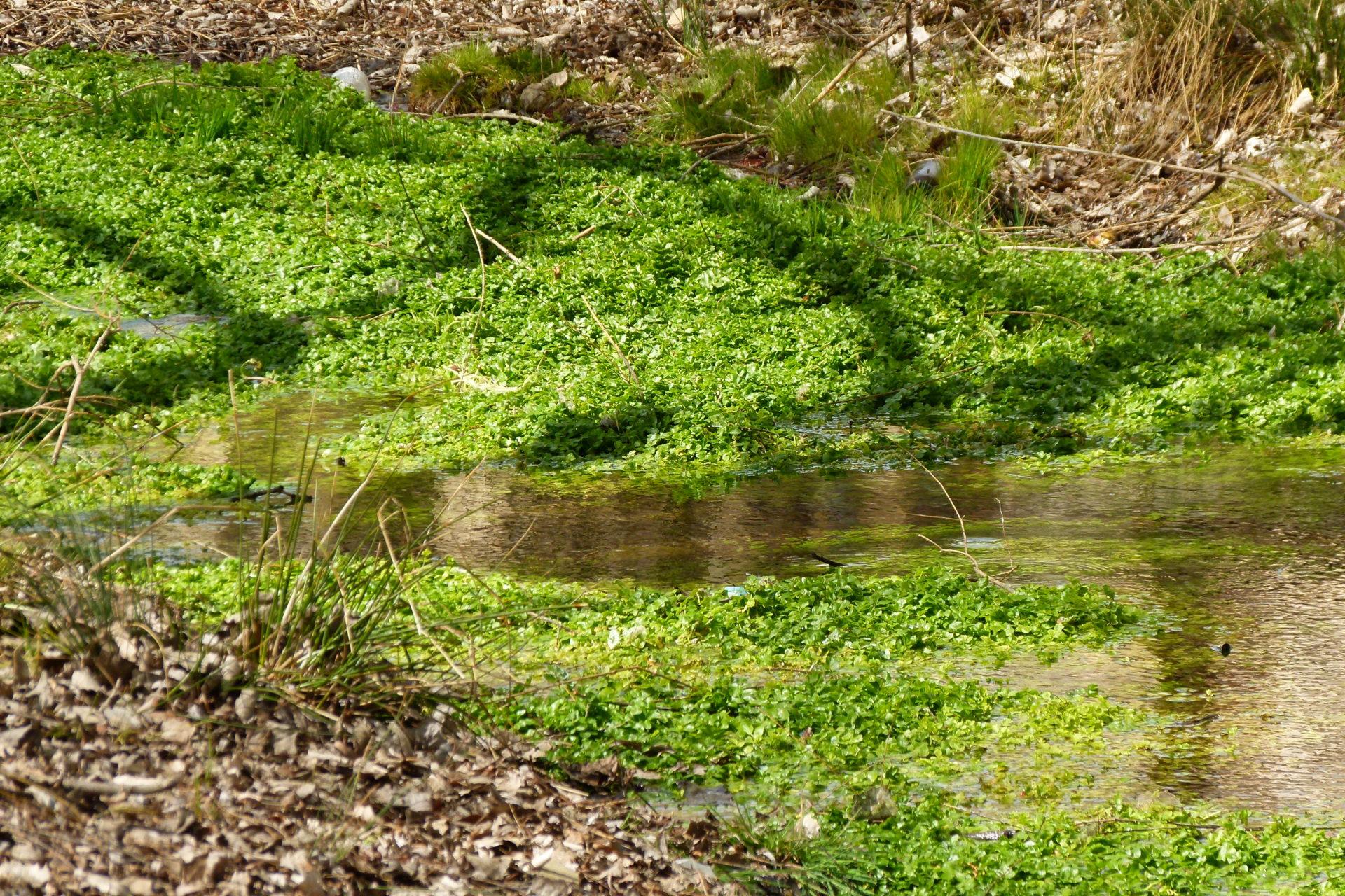 El agua para el riego de las plantas, es captada directamente del manantial, lo que garantiza la salubridad y seguridad de la misma.