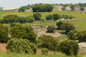 Las aguas de lluvia son recogidas y filtradas en los montes próximos a CALterras.